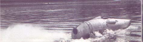 acuaticos